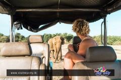 Elephant Place